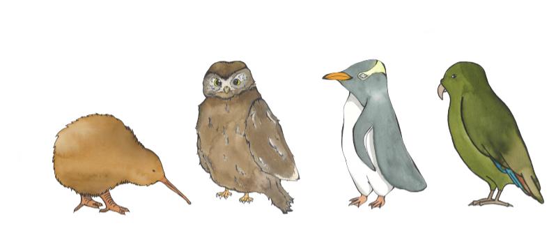 4Cs Birds